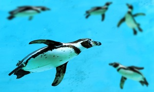 Seven penguins drown in latest deadly incident at Calgary zoo